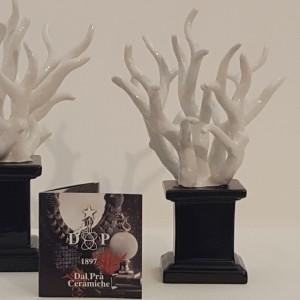 Ciuffo Corallo bianco medio