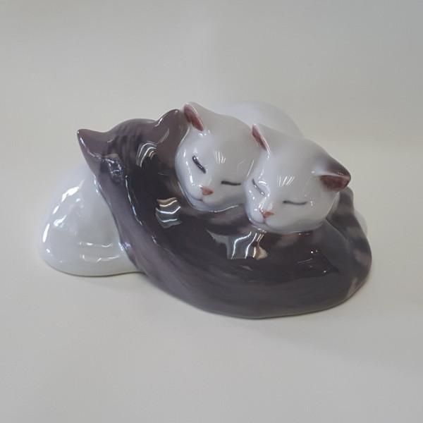 Animali Gatti